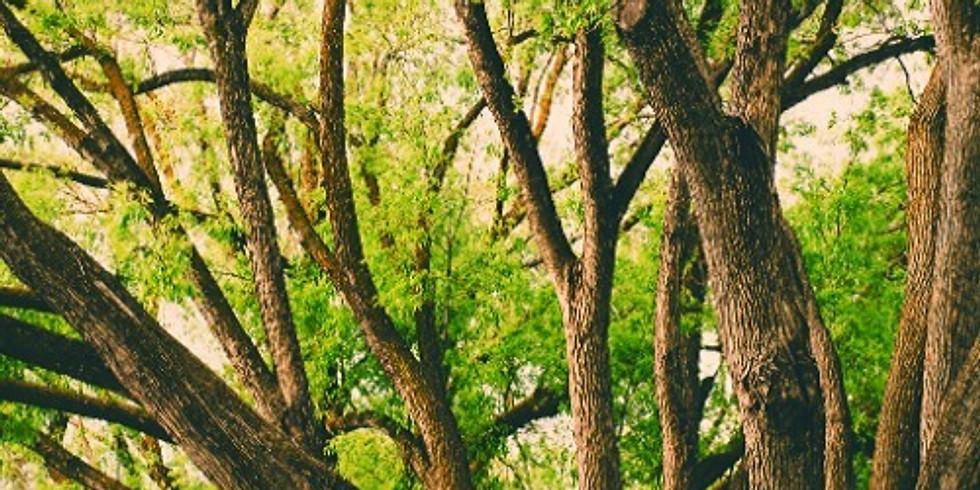 Vibrational Tree Medicine & Divination