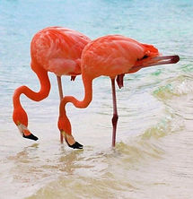 flamingos_lake_nakuru_14.jpg