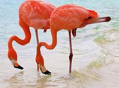 flamingos_lake_nakuru_14.jpg