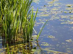 Solutions Fondées sur la Nature - préser