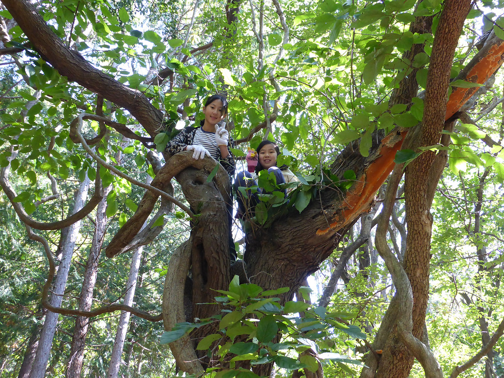 大きな桑の木で木登り。こんな遊びが贅沢に感じる