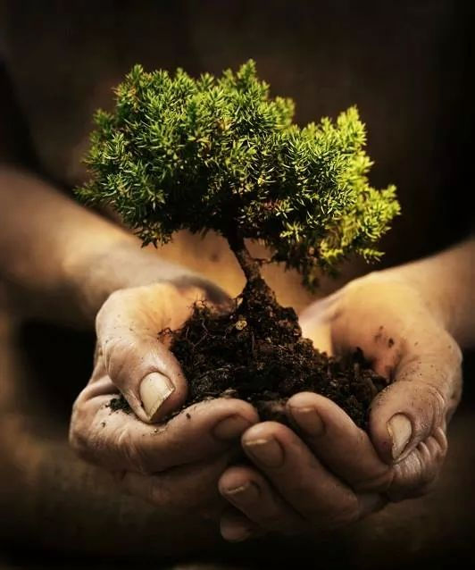 Árbol verde y tierra marrón en tus manos. Yoga  y meditación arraigan en tu conciencia. En Alcalá de Henares y Azuqueca