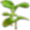 elixirion waters growing plant.png