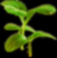 nachhaltige technologie wasser pflanzen