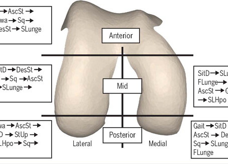 Knee joint loading in healthy adults during functional exercises:
