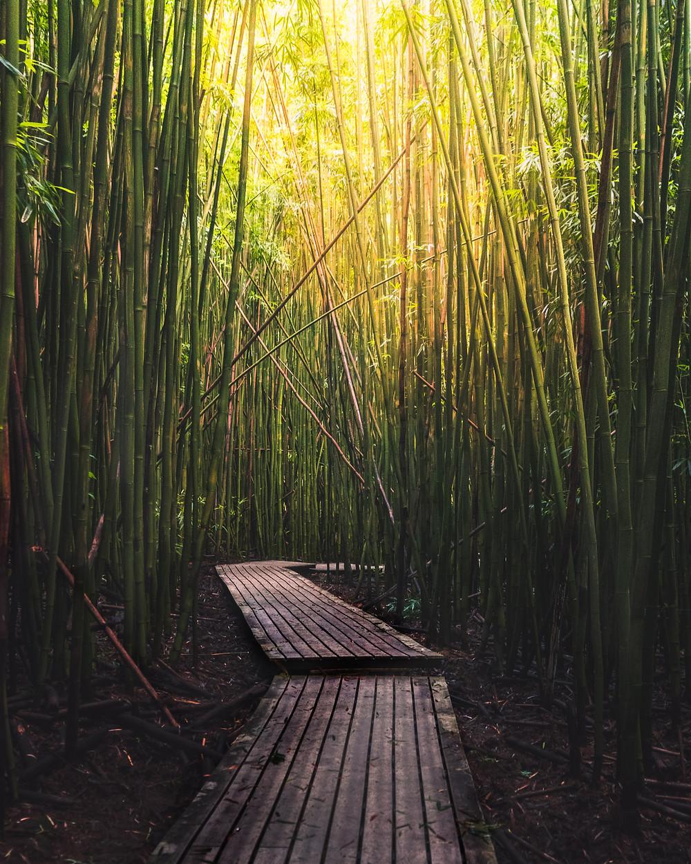hiking the bamboo jungle in Maui