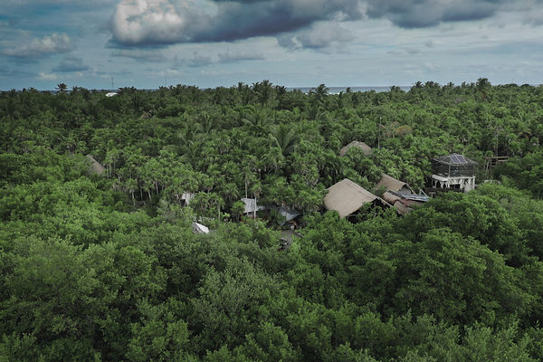 Drone view over the Tulum Jungle