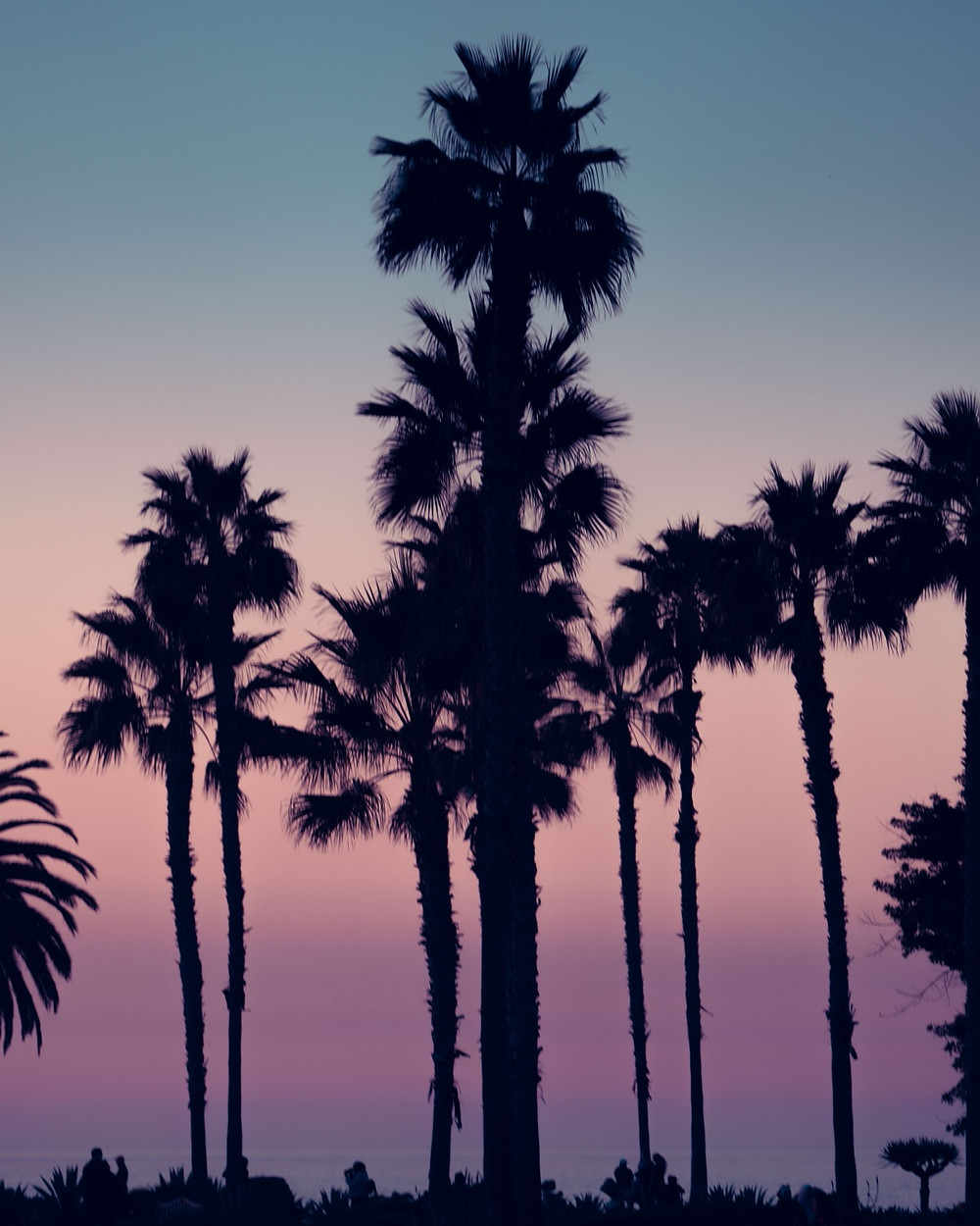 Colorful palm tree gradient sky behind a set of silhouette palm trees
