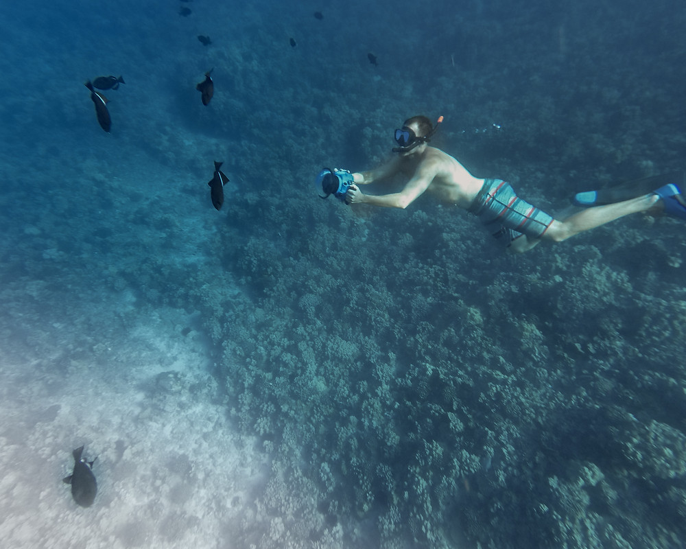 snorkeler swimming and photographing fish