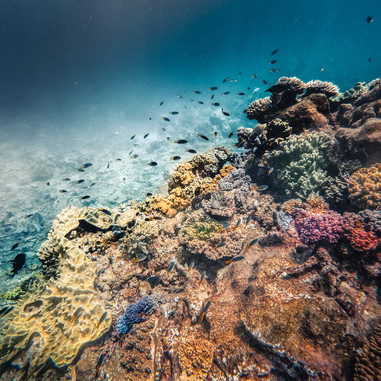 Exploring The Great Barrier Reef; Cairns