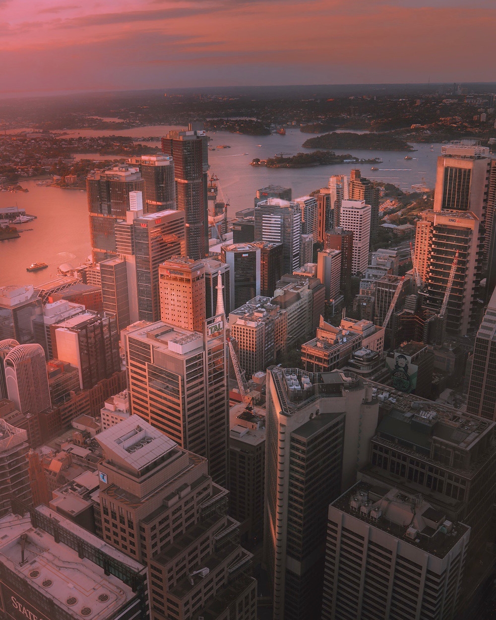 View of the Habor from Sydney Tower at Golden Hour