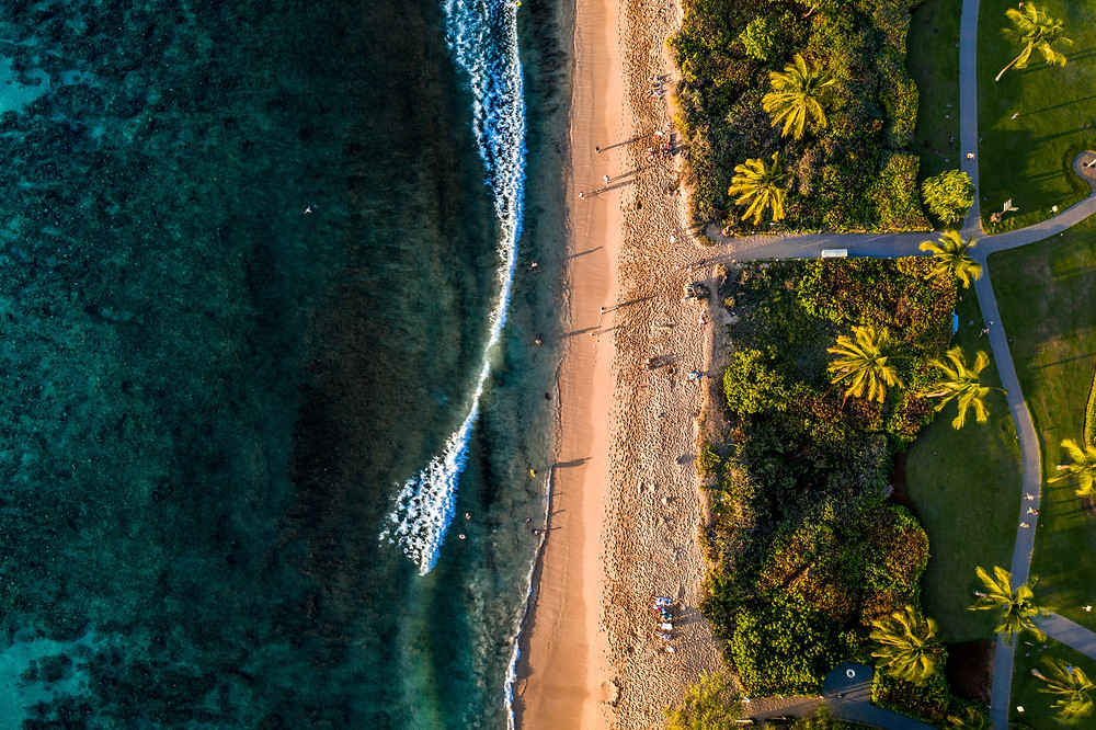 overhead view of a wave cashing on to a palm tree beach