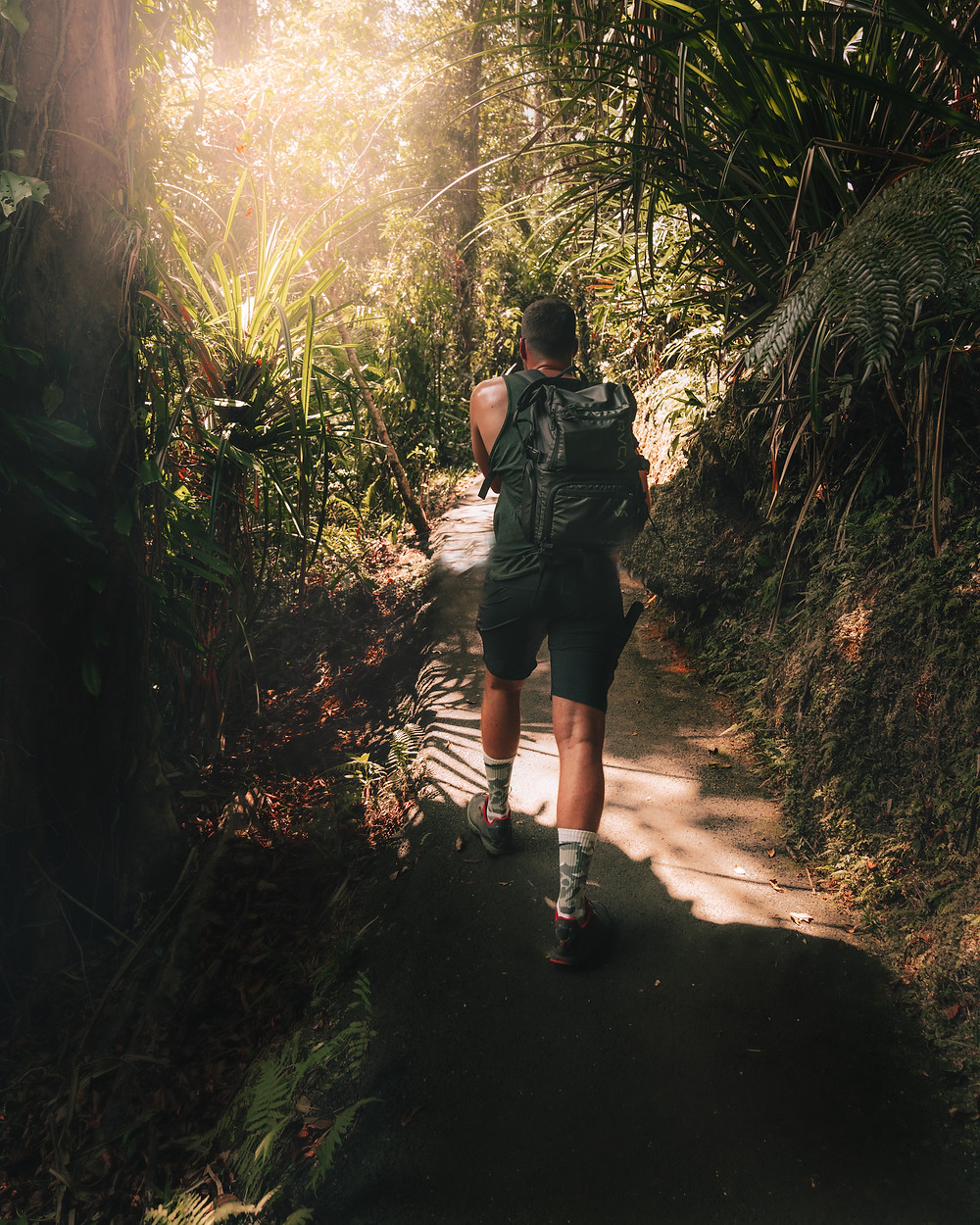 Man hiking through the jungle in Cairns, Australia