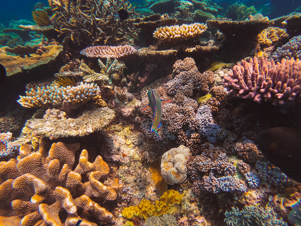 Colorful and Live Coral Reef in Australia