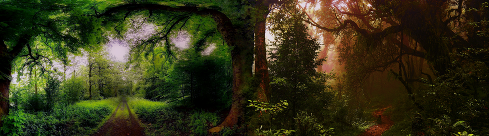 ForestPath.png