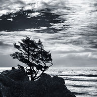 Little Guy 7  Alone at Ecola.jpg