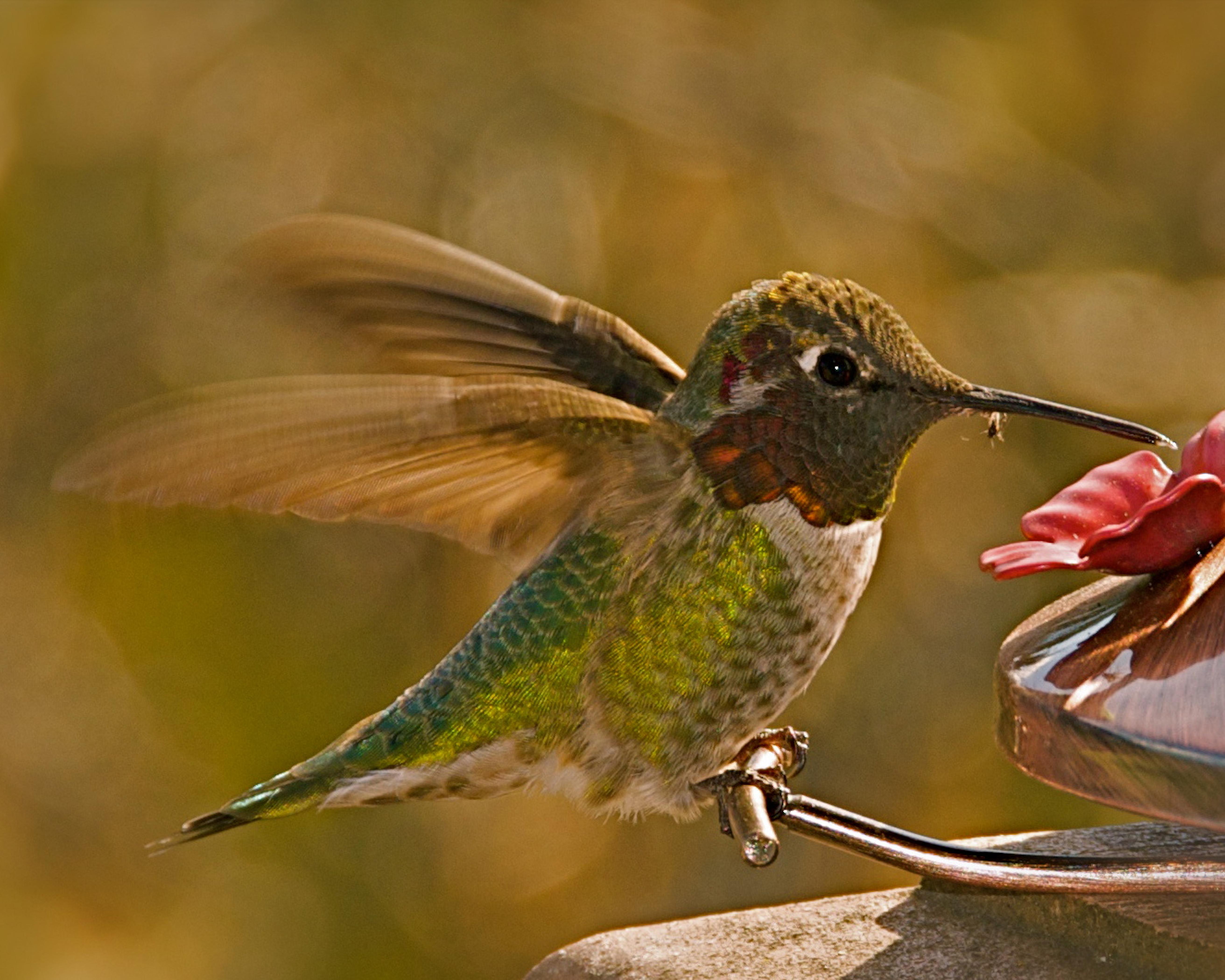 BQ Hummingbird with Spider (1.1MB)