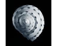 Gallery 16 Shell #1.jpg