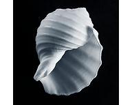 Gallery 13 Shell #7.jpg