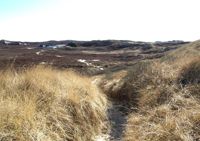 Das einsame Klappholttal in den Dünen