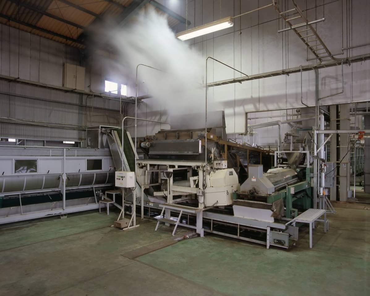 Our Green tea processing facility
