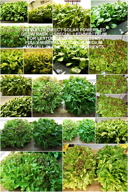 LETTUCE-ALL-IN-ONE-NUTRIENTS-AND-GROW-ME