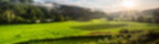 gran-campo-arroz-manana-tailandia_1150-1