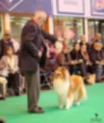 crufts 2017_1_edited.jpg