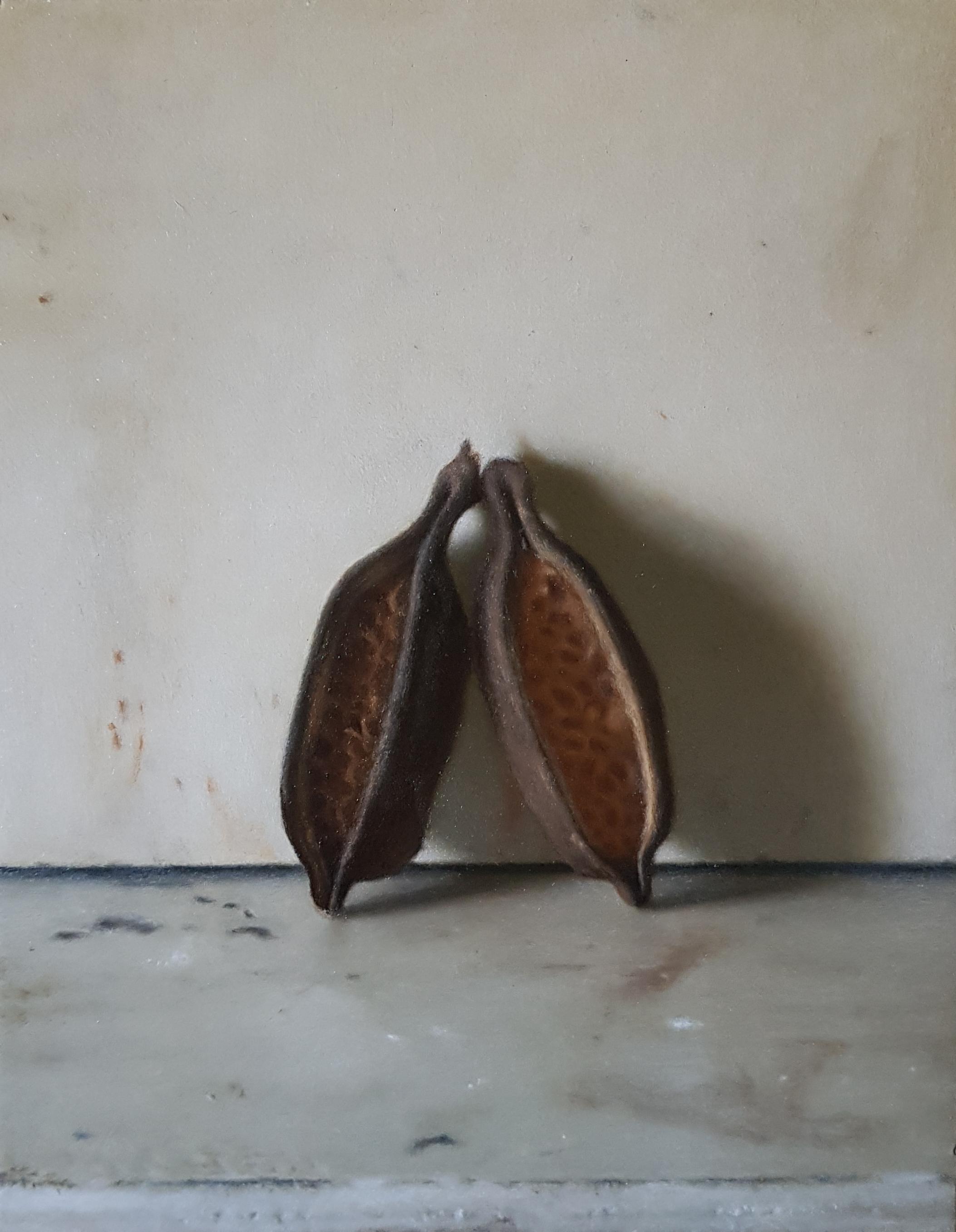 Brachychiton seed pods
