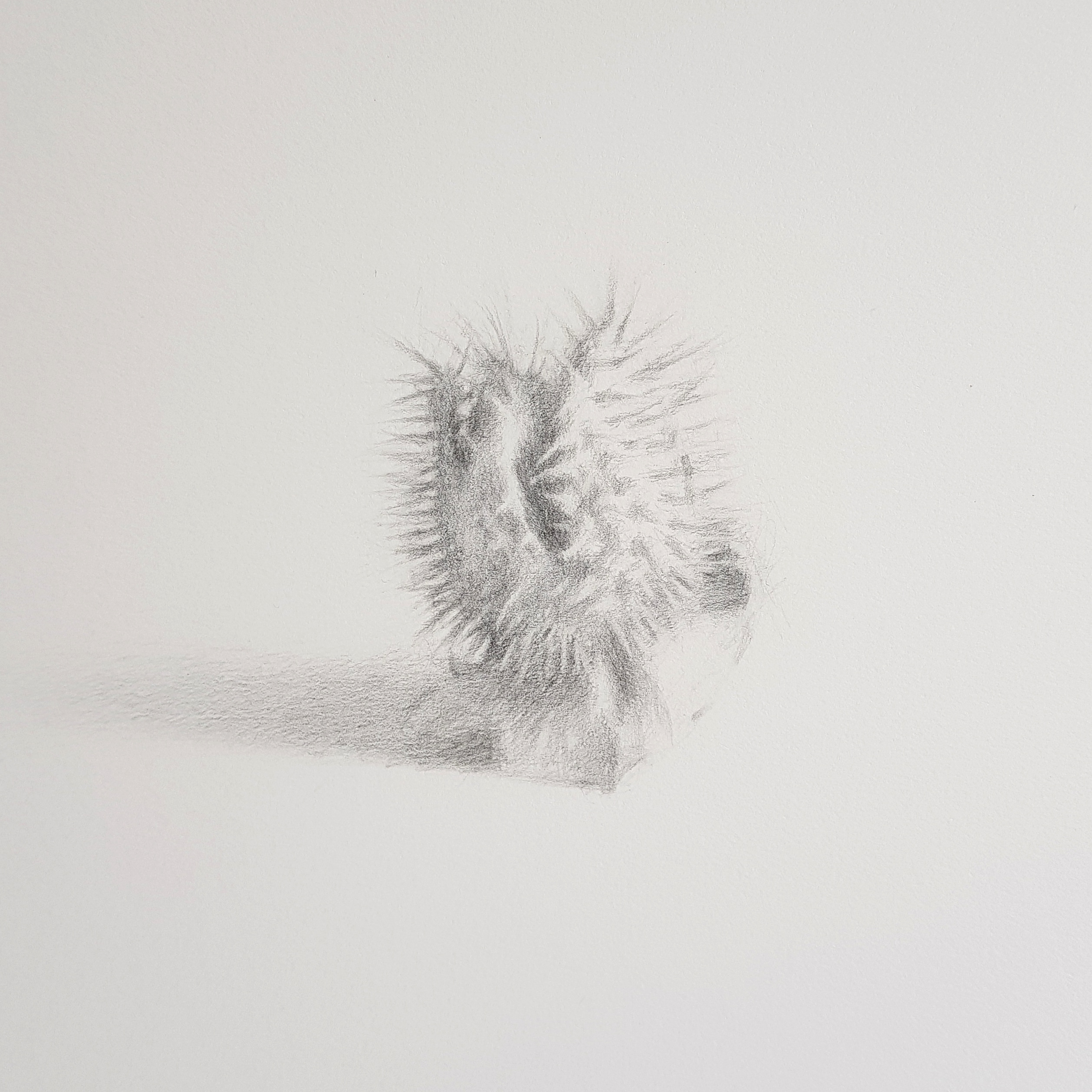Untitled, Graphite on paper, 2018