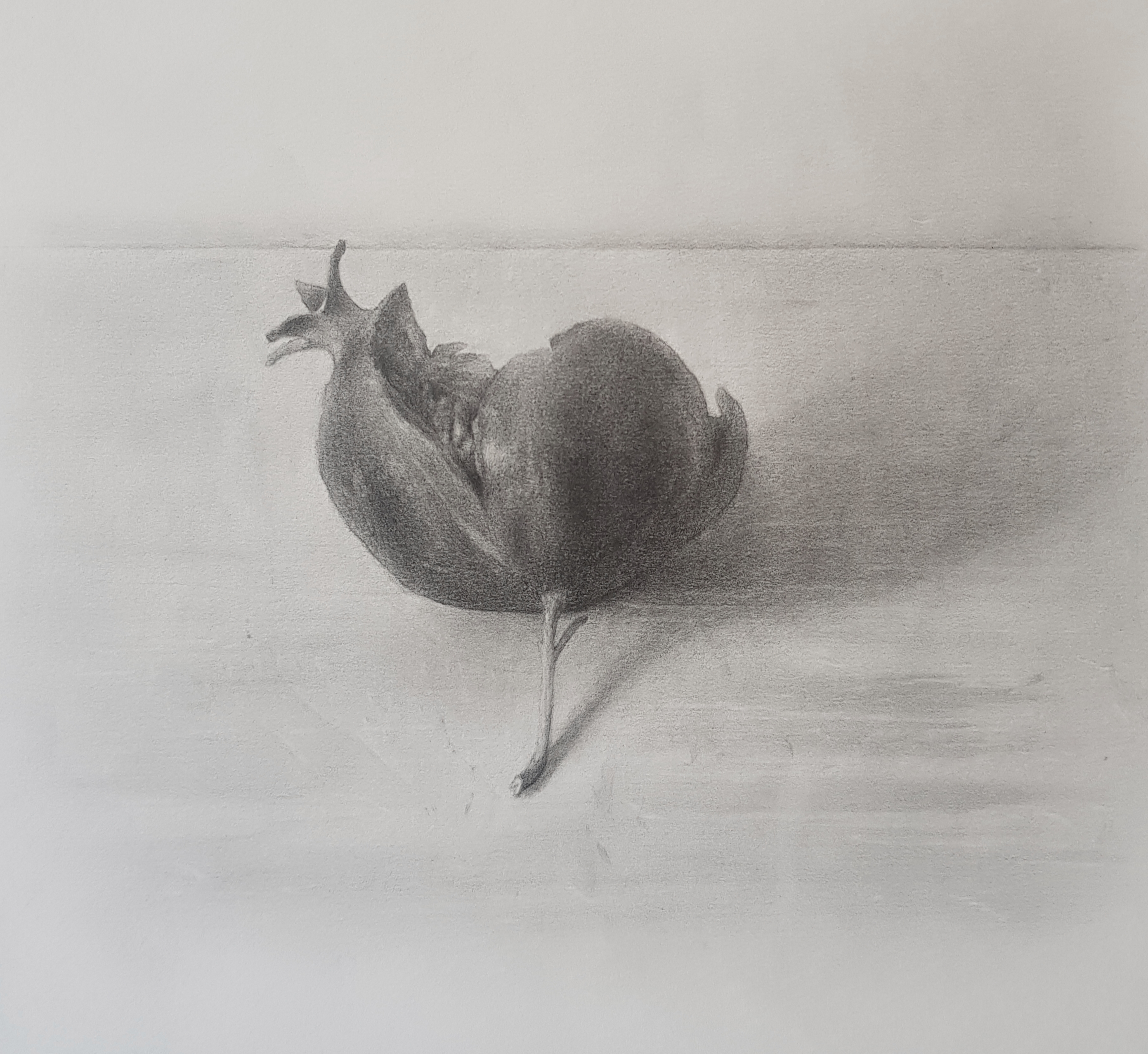 Pomegranate, pencil on paper, 2020