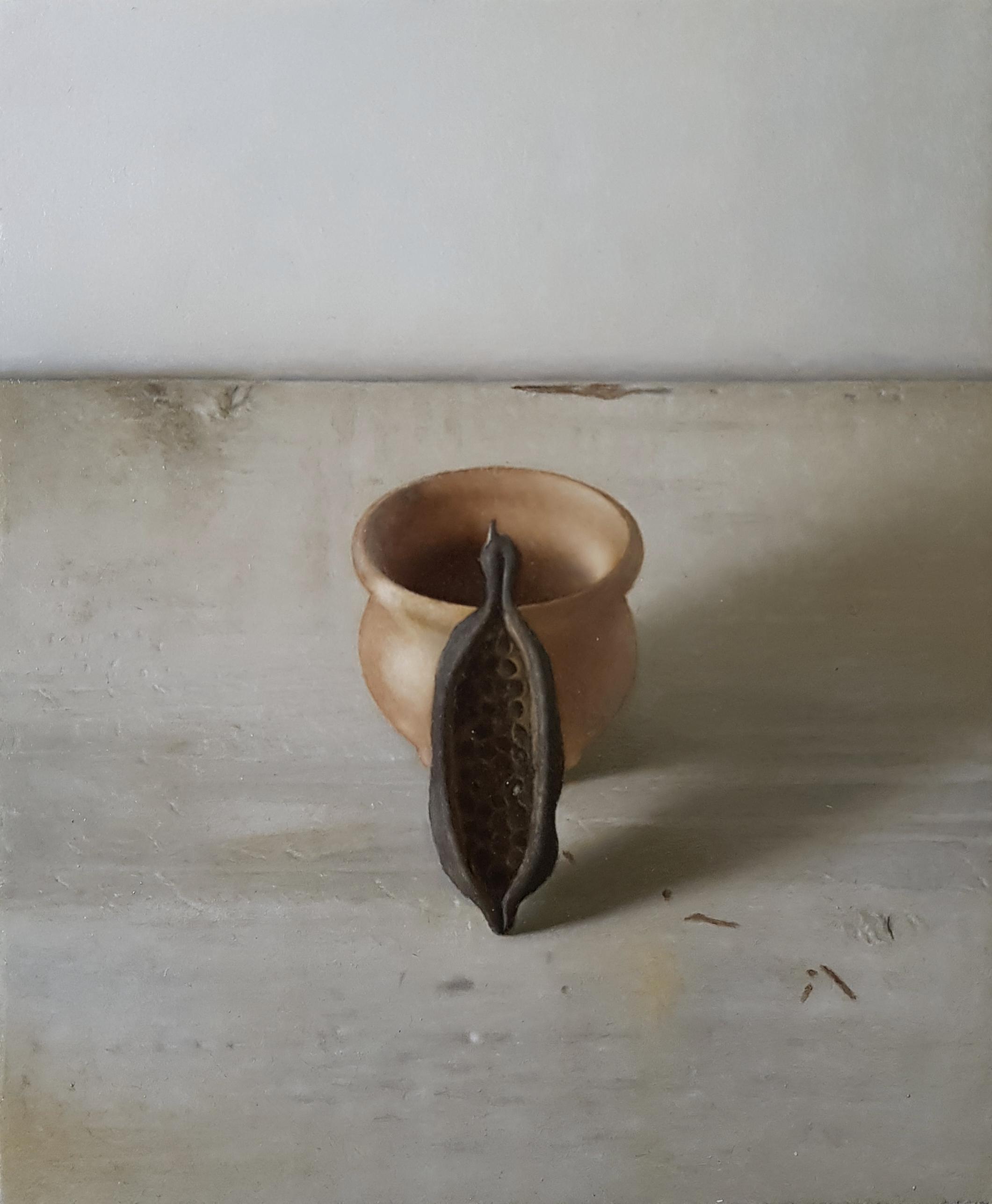 Brachychiton and pot