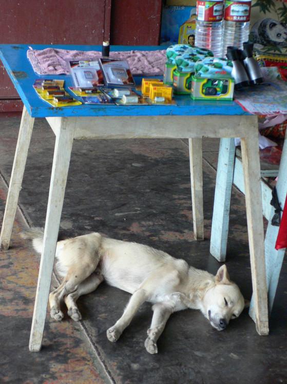 A dog sleeps under a small table.