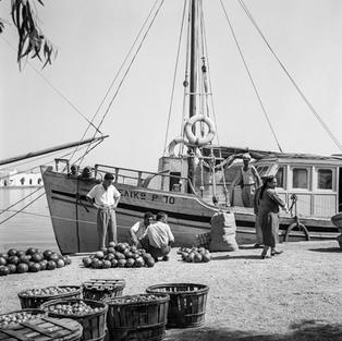 Fruit and vegetable trade