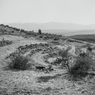 Outside the Citadel of Mycenae