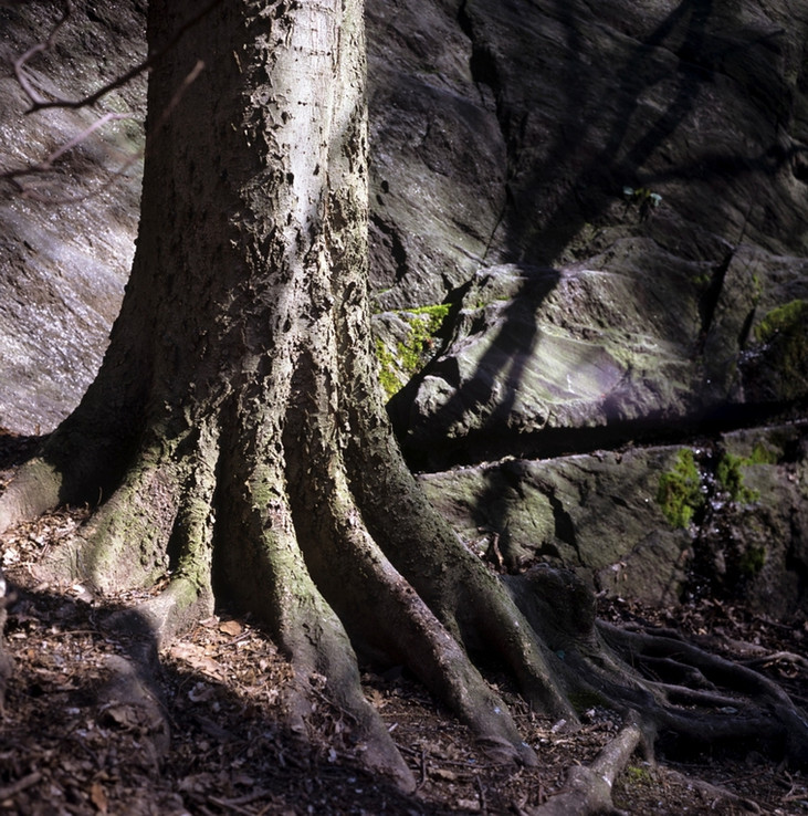 A hackberry and its bedrock companion in