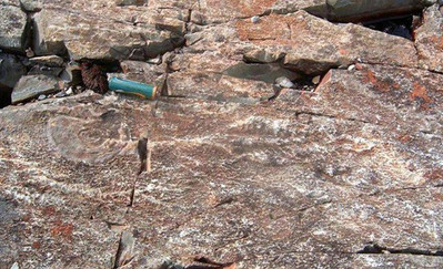 Ediacaran Fossils 3.jpg
