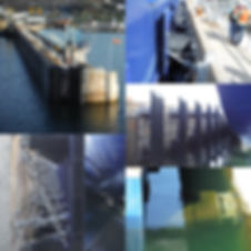 MAI Collage.jpg