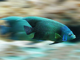 Impregnar-se: Não tiramos um peixe fora da água para ver como ele nada.