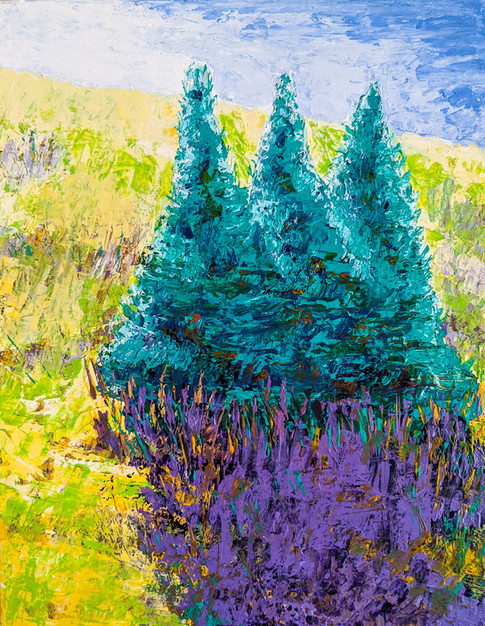 Blue Spruce 2
