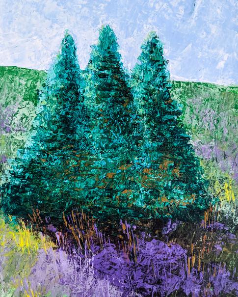 Blue Spruce 1