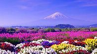 Wild-Spring-Flowers-Wallpaper.jpg