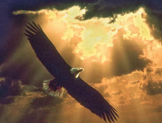 Freedom 10.jpg
