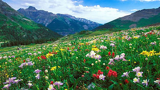 Landscape-meadow-Colorful-flowers-in-the