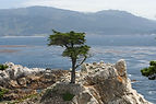 monterey-bay-with-rock-and-tree.jpg