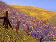 barbed-wire-and-wildflowers-gorman-calif