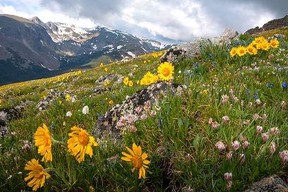 wildflowers-RMNP.jpg