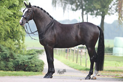 KVC Horses