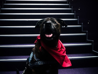 Z psami do kina Vol. 2