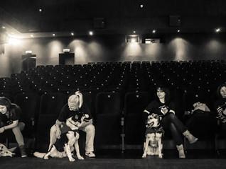 Z psami do kina?!
